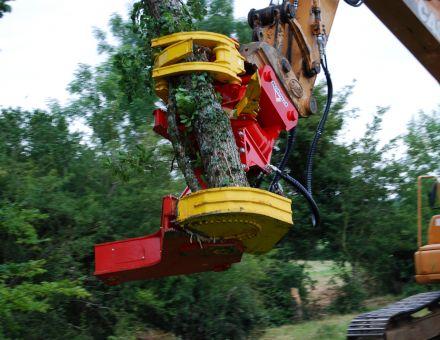 Transport du tronc