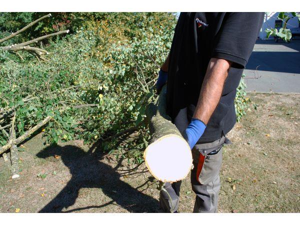 Diamètre maxi des branches 20 cm